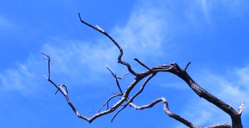 arbre_brokenhurst_510